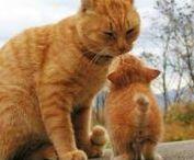 Catvills / All Catvills posts