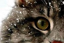 Cat Breeds / A great list with information on cat breeds. Discover different personality traits, hypoallergenic, breeds that don't shed, tendencies, health concerns and how to best care for your special or rare breed of kitty.