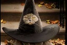 Cat Costumes / Cats in costume on parade! Great ideas for that perfect photo session or when celebrating Halloween. Adorable kitties sure to inspire you on kitty's next outfit!