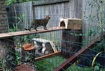 Cat Outdoor Living / Catios are the perfect way to give your cat some fresh air and keep kitty safe from the elements outdoors! DIY projects and designs for climbing, fence tunnels, outdoor spaces, houses and litter boxes.