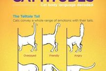 Cat Behavior / Cat behavior, the mystery unlocked! Find out why kitty does what kitty does and how to keep your cat happy and healthy emotionally!