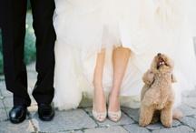 Wedding Photography / by Natalia Cashen