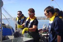 Maritime Bassin / Partager le quotidien d'un pêcheur ou d'un ostréiculteur du Bassin, partez déguster des huîtres à la cabane les pieds dans l'eau ou promenez vous dans nos ports et villages !!