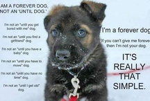 Yup...It's all about the Dogs / For my love of Dogs  / by Shelly Elliott