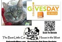 Colorado Gives Day 2013 / 24 Hours to Give Where You Live - December 10, 2013 - #COGivesDay #Cats #Kittens #AnimalWelfare