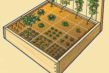 Vegetable & Herb Gardening / Gardening Plants