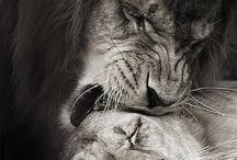 p h o t o s - n a t u r e / Look deep into nature & you will understand everything better.-Albert Einstein