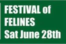 Festival of Felines 2014 / Join us Saturday, June 28th, 11 am to 2 pm, at the Cat Care Society shelter, 5787 W. 6th Avenue (near 6th and Sheridan).