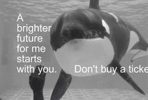 Whales / Anti Captivity of Whales, dolphins, etc.