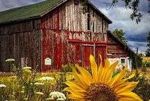 P ~ Barns & Stables
