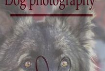 dog photography / i love dogs and taking there picture