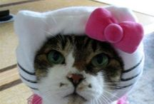 Hello Kitty, seriously how old am I? / Everything hello kitty