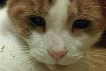yes, i have a cat album / by Rebekah Pelletier
