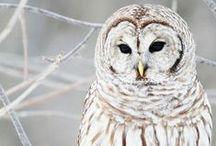 Beautiful Animals / A collection of beautiful photos of animal.