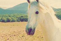 Chevaux & équitation
