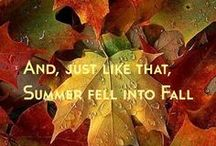 Autumn / Every falling leaf is a story told. / by Judi Garber