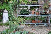 how my garden grows