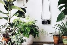 garden party / floral and gardening ideas