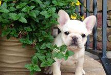 Cute animals! / by Randi Collins