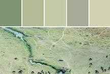 Sage Brush Green   CL 1944M / Color Group: Earth 3 Description: Light Yellow-Green, Evokes Hope