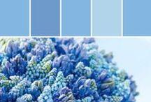 Cornflower Blue   CL 2244W / Medium Blue, Evokes Trust
