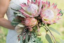Protea wedding inspiration / Mock-ups and sketches done by Nicky Michell.
