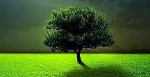 Beautiful nature / Beautiful nature
