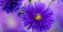 Flowers!! / Flowers
