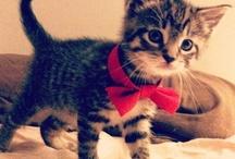 Kitties!!!!!!!!!  / by Olivia Douglas