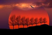 Nature - Sun