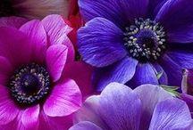 Nature - Flowers