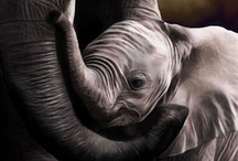 Animals - Parental Love
