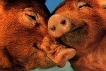 Animals - Love