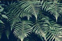 Retropicana / welcome to the jungle : palm trees + ananas + parrots, tigers and pink flamingos + acapulco chairs + hawaiian shirts...