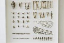 Specimen collections