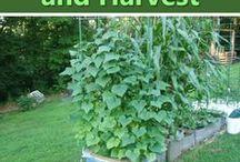 Orto & Giardino / cura dell'orto e giardino