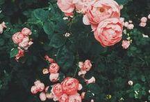 Hashtag Spring Love / Der Frühling ist da! Wie sehr liebe ich es, wie schön alles blüht, wie schön die Sonnenuntergänge aussehen und dass man abends endlich auf dem Balkon sitzen kann. Spring, Blumen, Flowers, Frühlingsgefühle, Schönheit, Sonnenuntergänge, Ostern, Sunset, bunte Farben, Kälte vorbei.