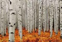 Hashtag Wood Love / Bilder, Fotos und Illustrationen von Wäldern und Bäumen. Der Wald in jeder Jahreszeit, Herbst, Winter, Sommer und Frühling. <3 Meine neu entdeckte Naturliebe treibt mich immer öfter für Spaziergänge in den Wald. Ich liebe das Grün, die Blätter und Pflanzen. Nur auf die Nacktschnecken könnte ich verzichten :D