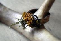lichen + moss