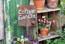 Ogród / balkon