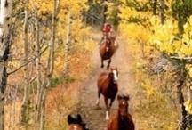 Horses / by Gina Shickle Mundigler