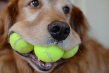 Dogs / by Gina Shickle Mundigler