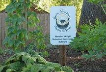 """""""At-Risk"""" Herbs Growing at Herb Pharm / For the benefit of the plant communities, wild animals, harvesters, farmers, consumers, manufacturers, retailers and practitioners, United Plant Savers offers this list of wild medicinal plants which are currently most sensitive to the impact of human activities. Their intent is to assure the increasing abundance of the medicinal plants which are currently in decline due to expanding popularity and shrinking habitat and range. For more information please visit www.unitedplantsavers.org"""