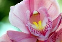 Sitting in the middle of an Orchid / by Pat Ty