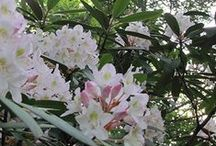 Smoky Mountain Springtime / Springtime in the Smoky Mountains