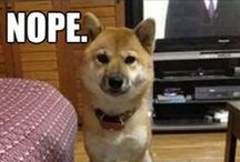 Dog Memes and GIFs / Yes. A dog meme and gif board for everyone out there who needs it. Thank you and you're welcome! - royalramps.com