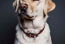 Pets / Facts about our beloved pets. Tips on how to take care of them better, and what they need