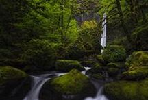 Forests, Rivers and Streams / All shots © Marco Romani.