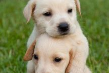 Cute Puppies / The cutest puppies you will ever find! Join the community! :) Message us to join!