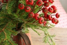 Holidays - Christmas / by Chris Ihde